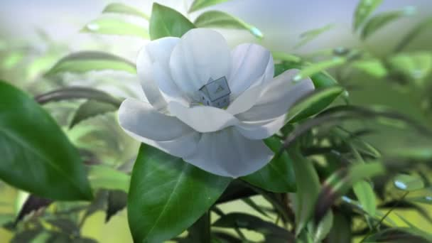 Growing magnolia flower time lapse animated concept success business
