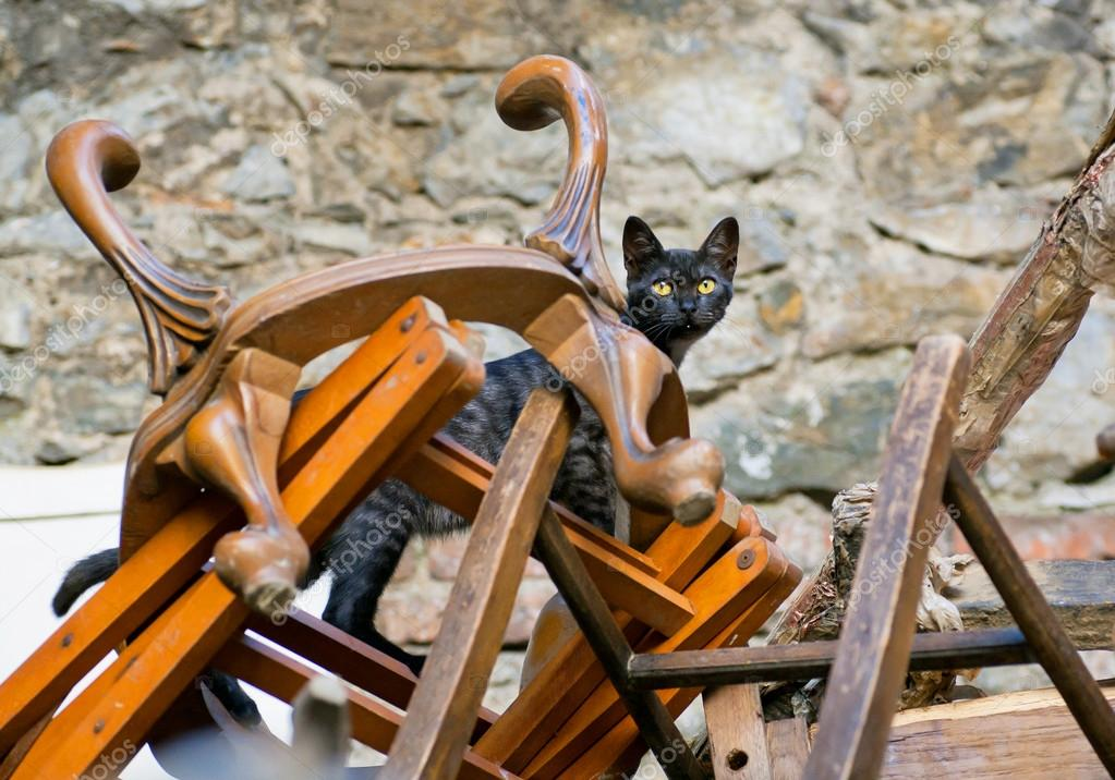 Cat Inside A Mountaine Of Wooden Chairs And Vintage Chairs U2014 Stock Photo