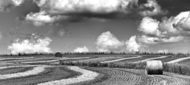 Black and white image of hay bales in a field