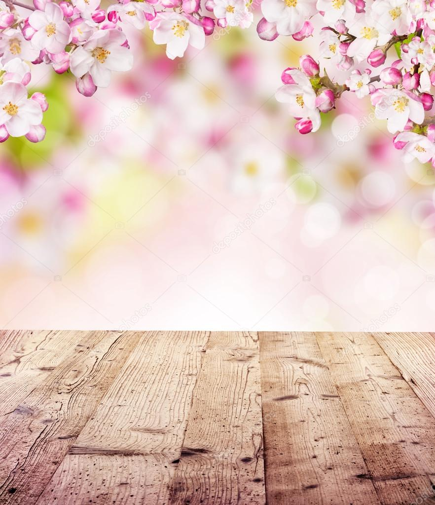 Cherry blossoms with empty wooden planks
