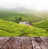 Fotografia Plance di legno vuote con sfocatura piantagione di tè