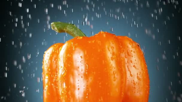 Super slow motion of orange pepper with dripping water drops. Filmed on high speed cinema camera, 1000 fps.