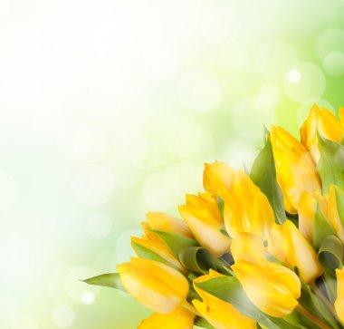 Bouquet of yelow tulips