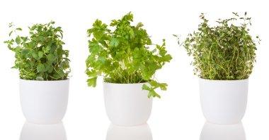 Various fresh herbs on white background