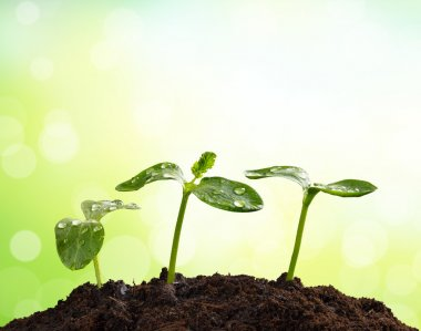 Young plants in earth, concept of new life