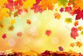 podzim opustí pozadí