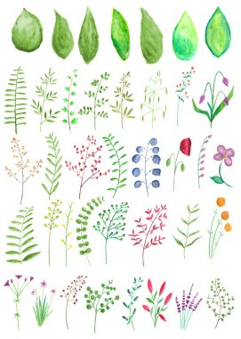 Watercolor Leaves, Branches and Plants