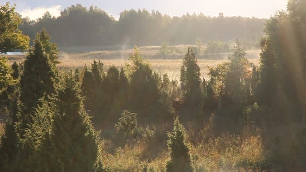 Ködös reggel.