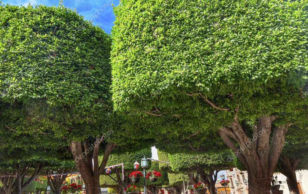 jardin arboles ciudad plaza san miguel de allende m xico