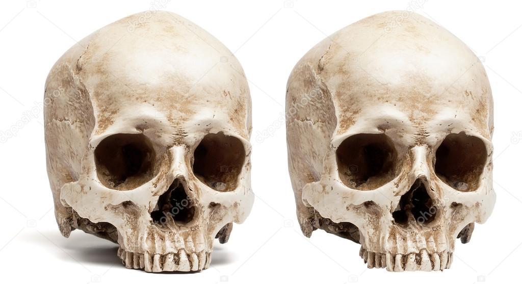 Schädel ohne Unterkiefer — Stockfoto © coffeemill #58714717