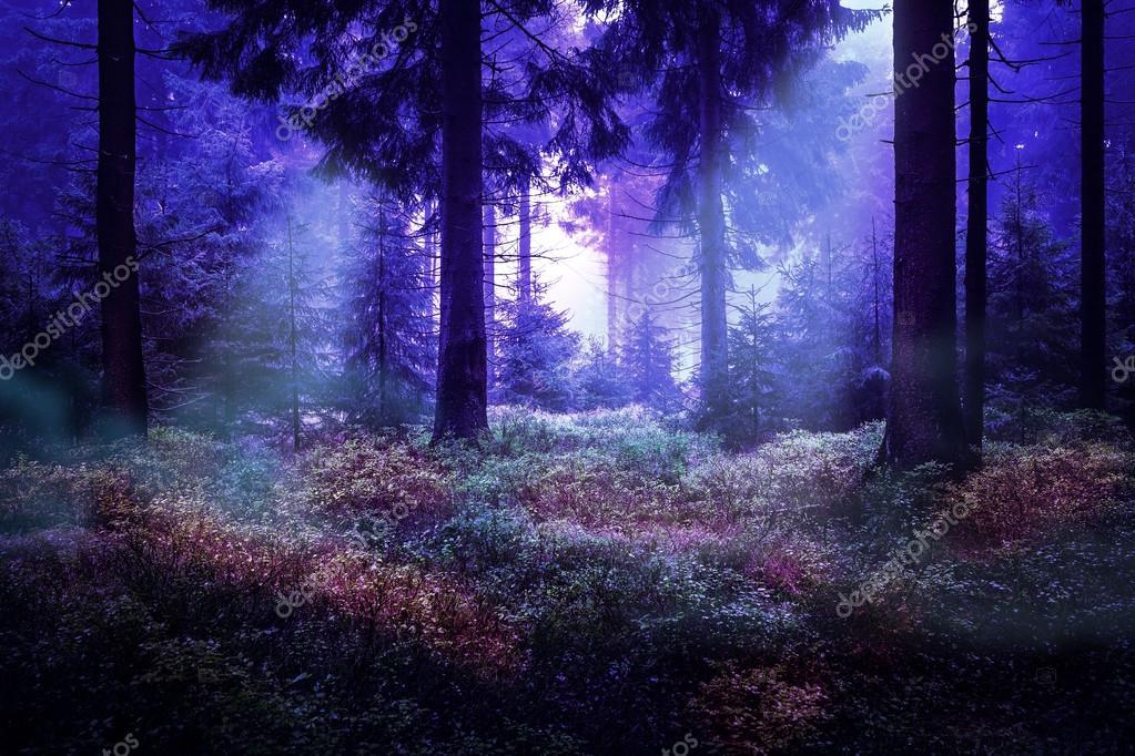 Фотообои вечнозеленый лес