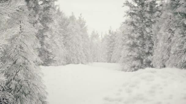 Winterlicher Schneefall im Wald, sanft verschneiter Weihnachtsmorgen mit fallendem Schnee. Winterlandschaft. Weihnachtlicher Hintergrund. Schneebedeckte Bäume. Nebel. Ultra realistische 3D nahtlose Schleifenanimation