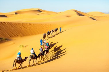 Caravan with bedouins and camels in sand dunes in desert at suns