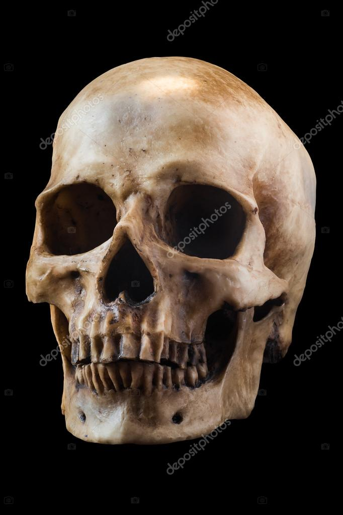 cráneo humano en fondo negro — Foto de stock © Fotolit2 #100777660