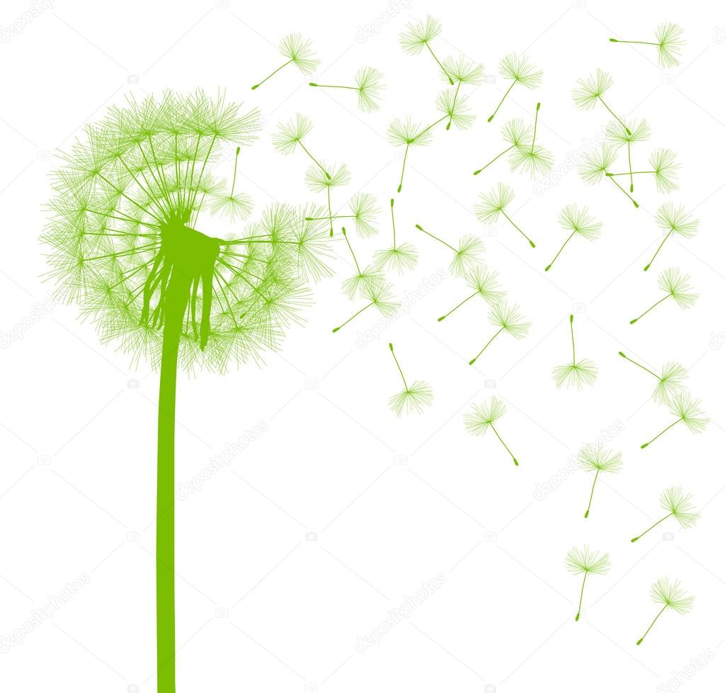 Dandelion seeds blowing away green ecology and time passing conc