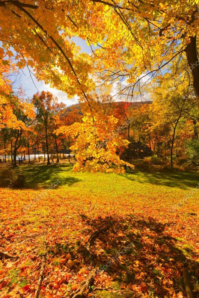 Colores otoño paisajes paisajes — Fotos de Stock © andreiorlov #57923837