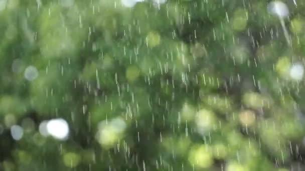 Letní déšť v zahradě nebo v parku