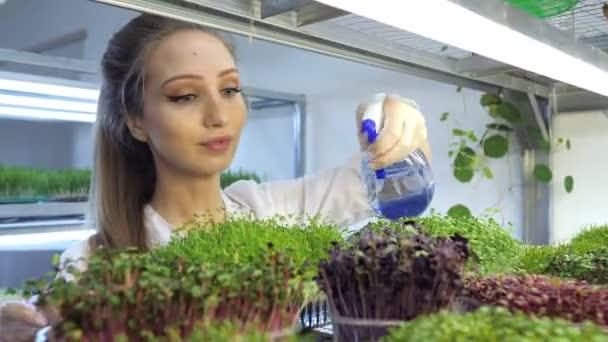 Mladá dívka rozprašuje mikrozeleně vodou. Malá mikrozelená farma