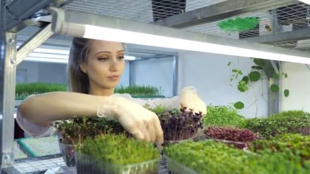 Blondýny dívka v mini farma rostlin mikrozeleně v domácím podnikání, moderní skleník