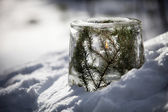 Fotografie decorative Ice lantern
