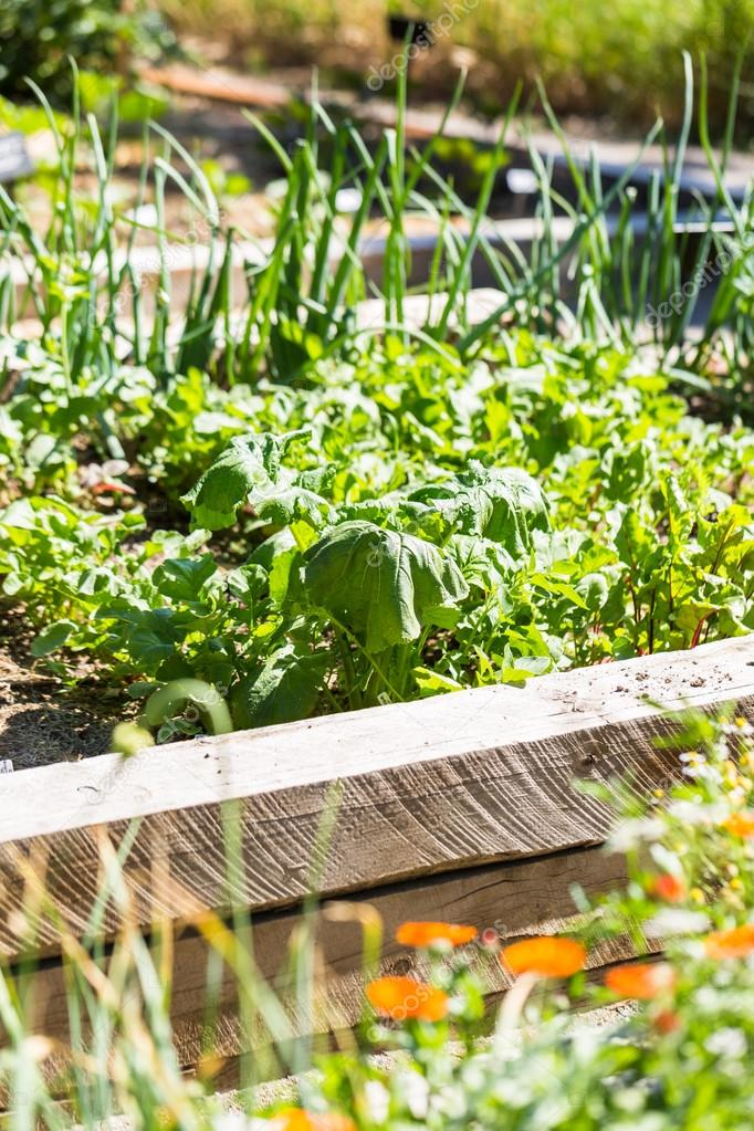 Petit Jardin Potager Bio Photographie Urban Light C 115801612