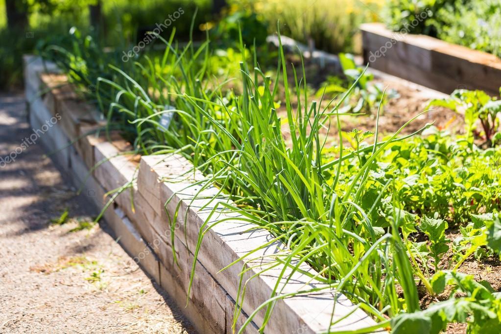 Petit Jardin Potager Bio Photographie Urban Light C 115801656