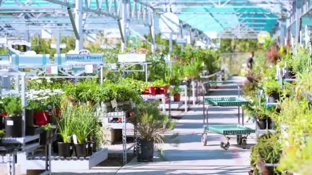 Řada rostlin spatřují prodej na místním zahradnictví
