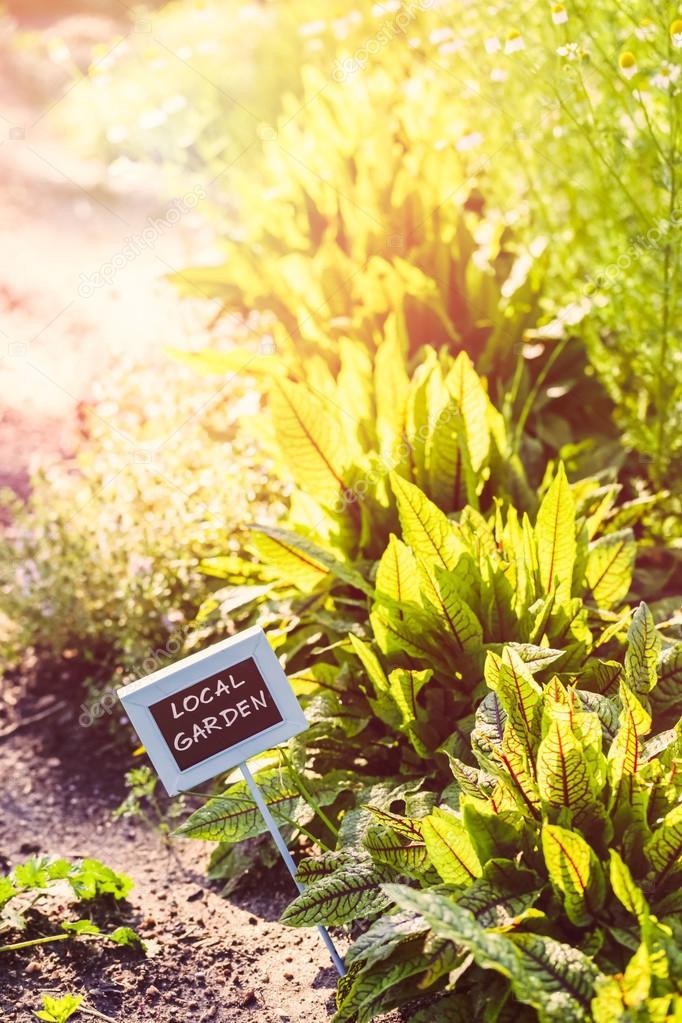 Early summer in Vegetable garden
