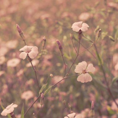 Pink retro flowers background