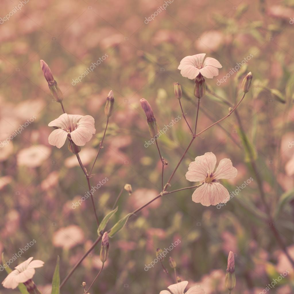 Pink retro flowers background
