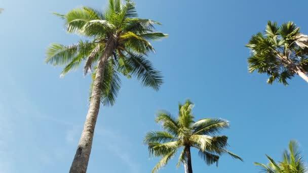Ansicht von unten Kokospalmen und blauer Himmel. Am Strand von Nang Thong, Phangnga, Thailand. Blick auf die Landschaft im Sommer. Schöner Strand ist ein berühmtes Touristenziel an der Andamanensee. 4K