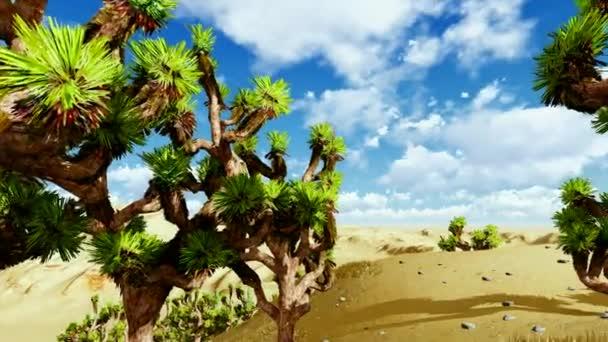 Joshua stromy