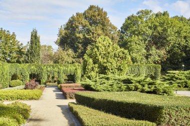 Summer garden in park
