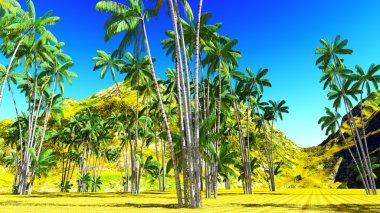 Oncosperma tigilarium - beautiful palm