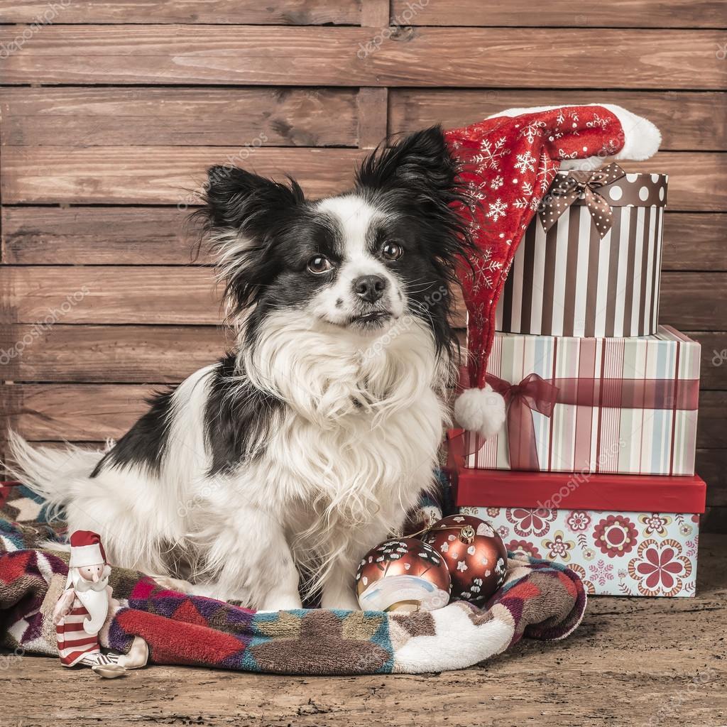 Dog Christmas Greeting Card Stock Photo Risia 91025140