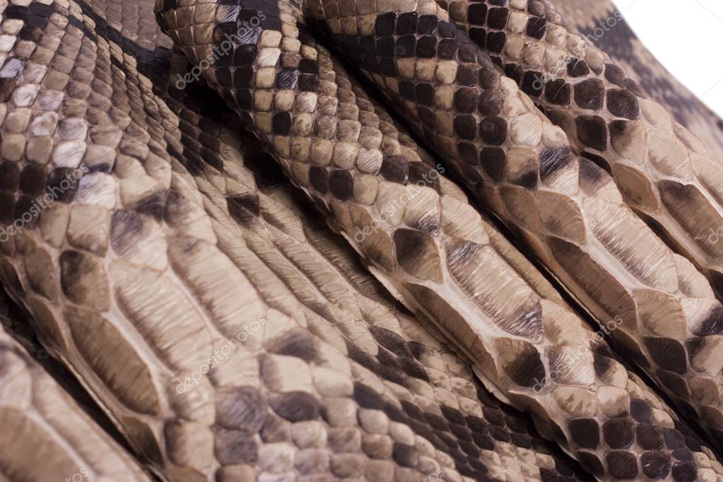 di in serpente Pelle texture pitone di animale pelle sfondo 6qwf70