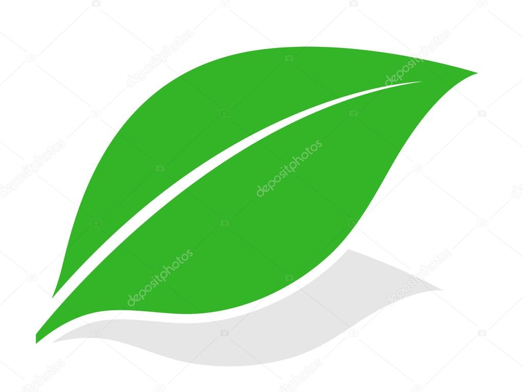 green leaf logo with shadow � stock vector 169 an 76110205