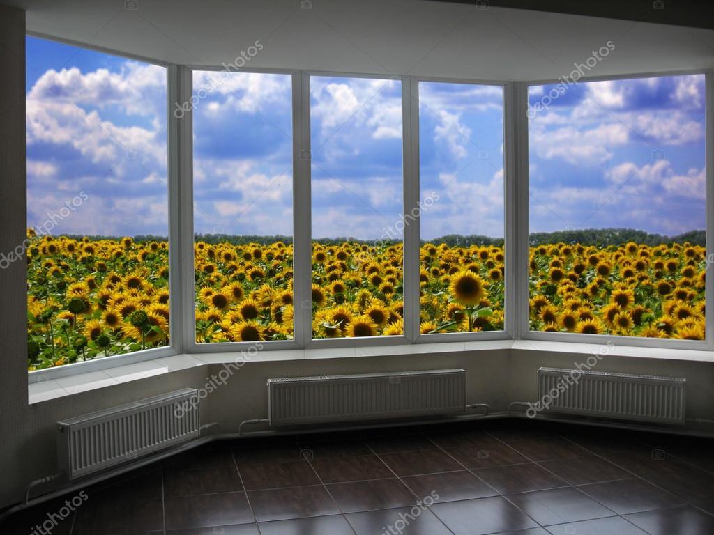 Finestre di plastica che domina il campo di girasoli - Stock finestre pvc ...