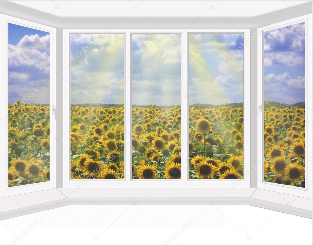 plastic windows overlooking the field of sunflowers