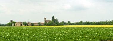 Field of potatoes in Piedmont