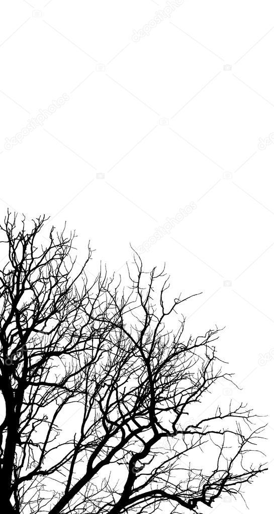 autumn branches02