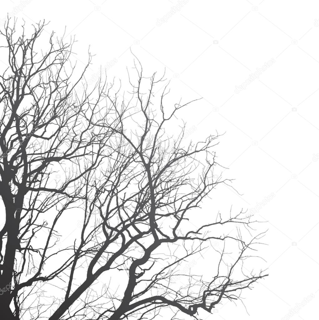 autumn branches01