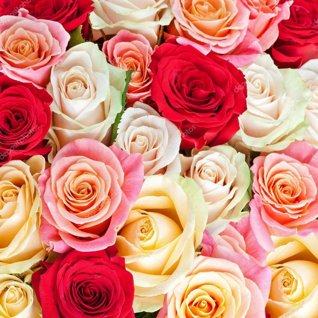 Fondo Rosas Ramo Multicolor Brillante De Rosas Fondo De Flores