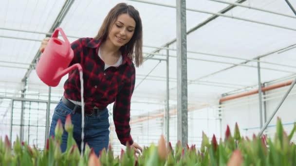 Vidám fiatal hölgy virágárus egy mosollyal kortyolgat piros tulipán fújatlan rügyek egy piros öntözőkanna