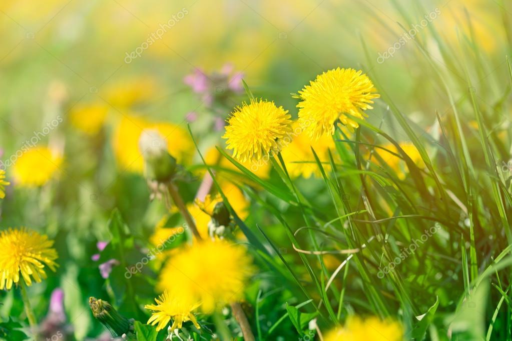 Fiori del prato in primavera — Foto Stock © lola19 #69820865