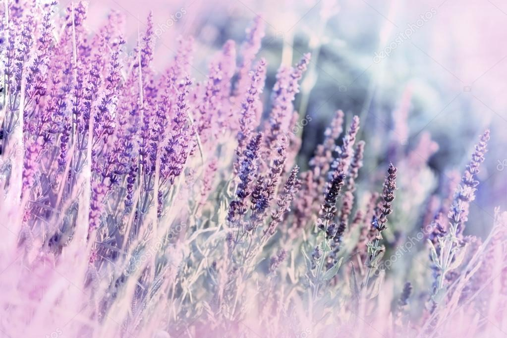 Soft focus on wild meadow flowers