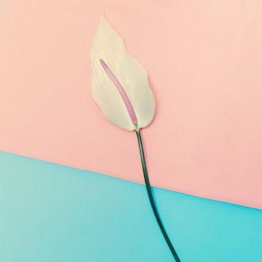 Calla  Flower Minimal vanilla style design