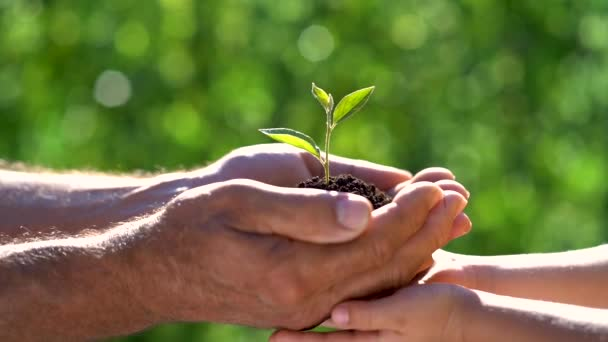Senior man and child holding young green plant in hands. Earth day spring holiday concept.
