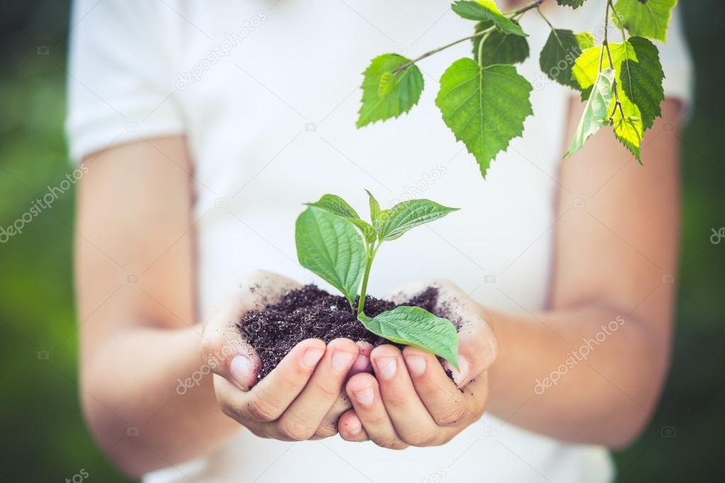 Child holding young plant