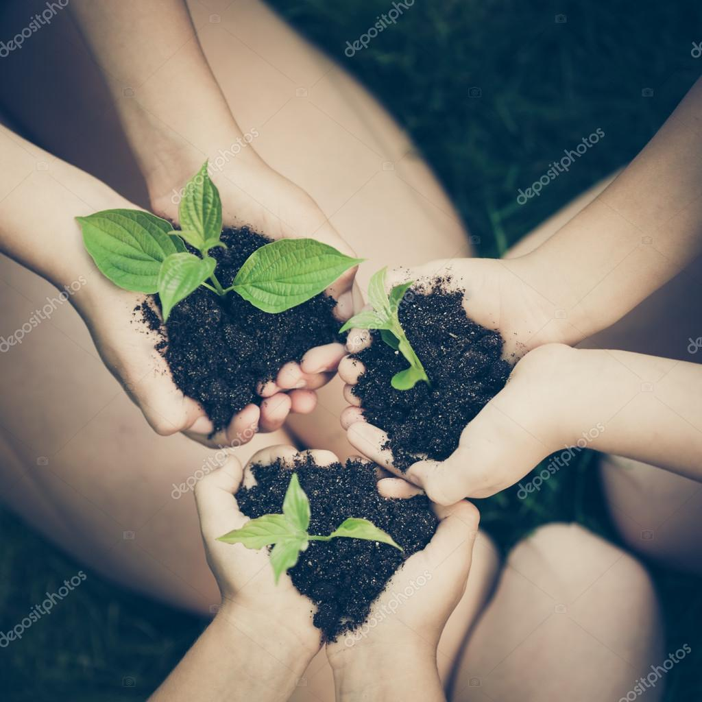Children holding young plant